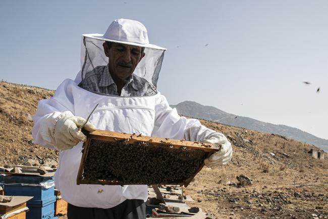 Duran and his beehives in Turkey